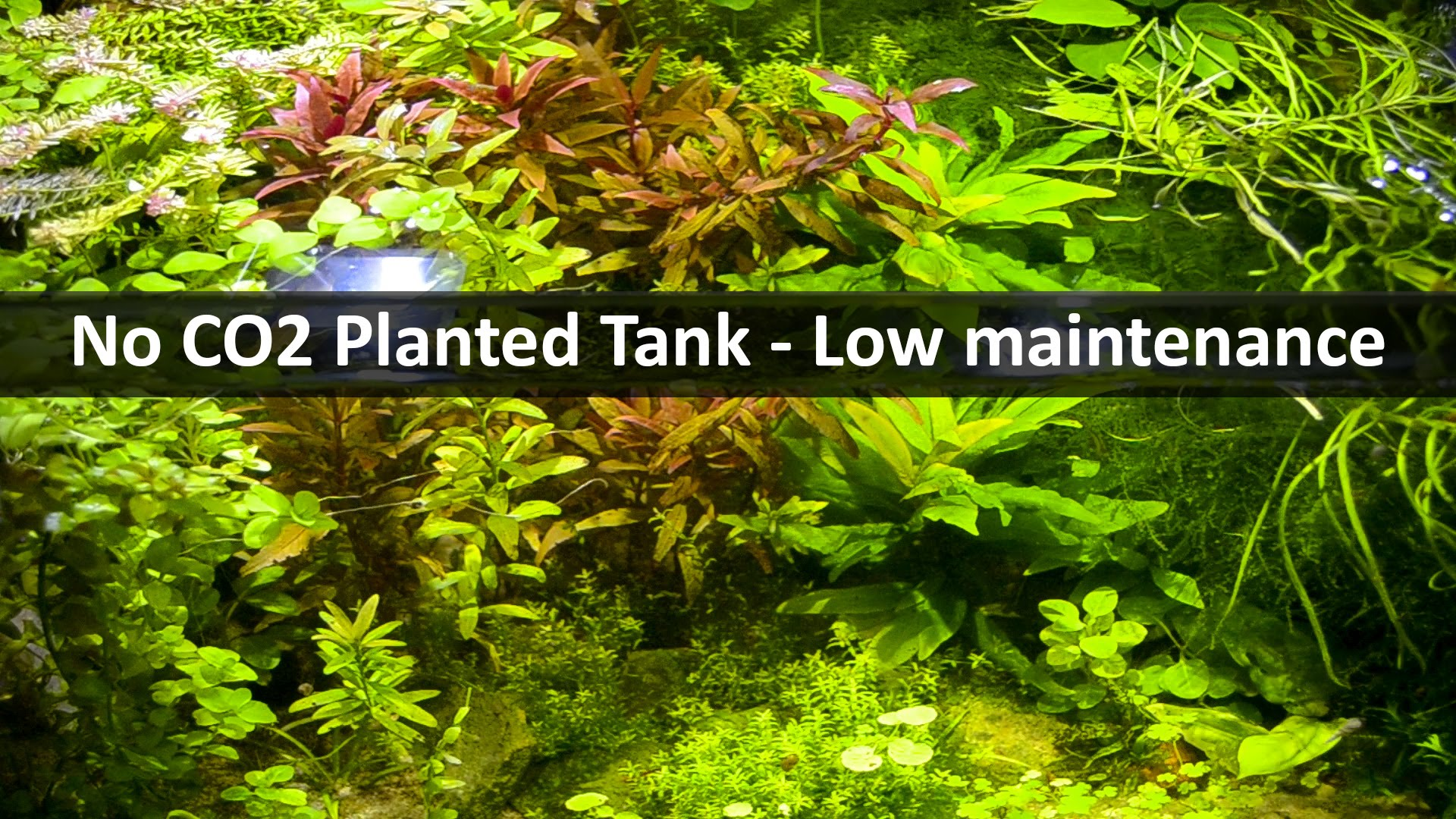 No co2 planted tank low maintenance aquarium alen axp for Low maintenance fish tank